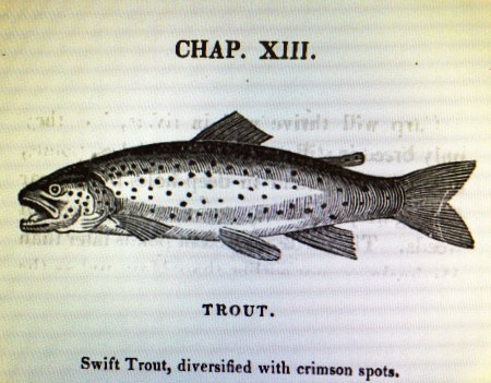 Salter Trout